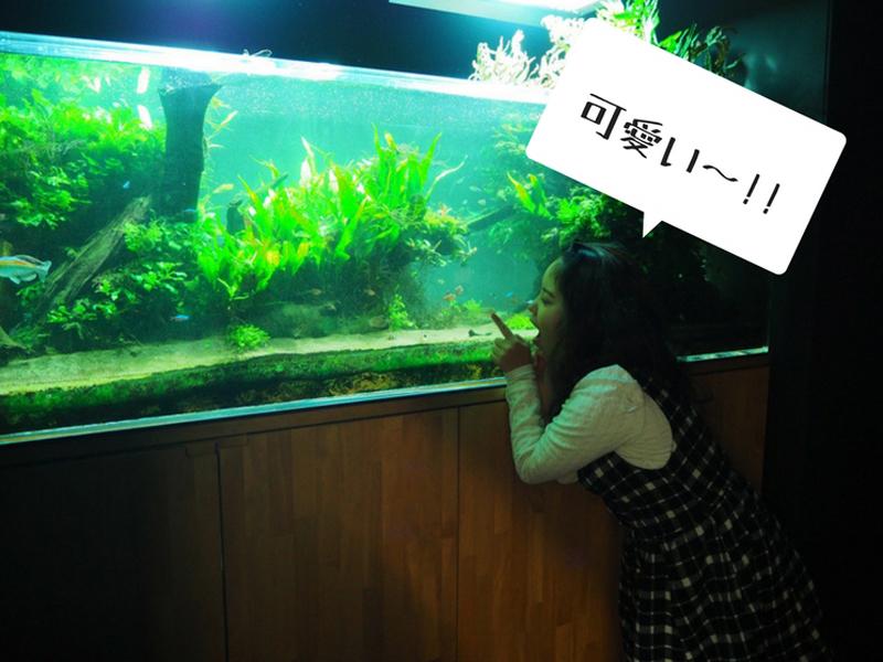 魚と遊ぶ社員