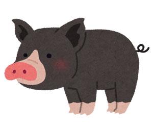 鹿児島県黒豚のイメージ画像