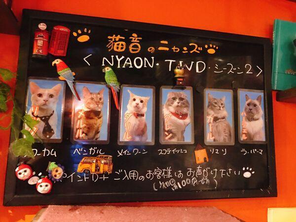 猫音のネコ一覧表